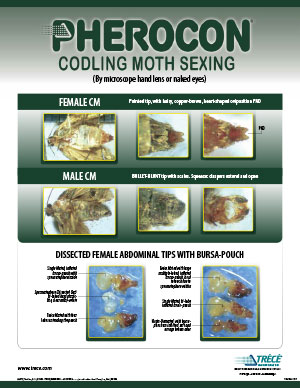 Pherocon Codling Moth Sexing Sheet Thumbnail